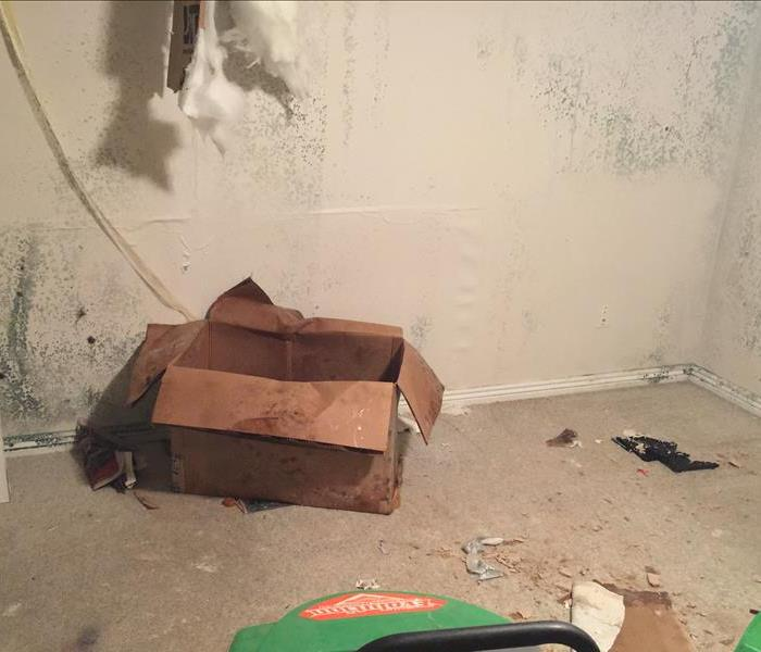 Mold Remediation Mold Damage - Causes of Mold Growth in Your Home