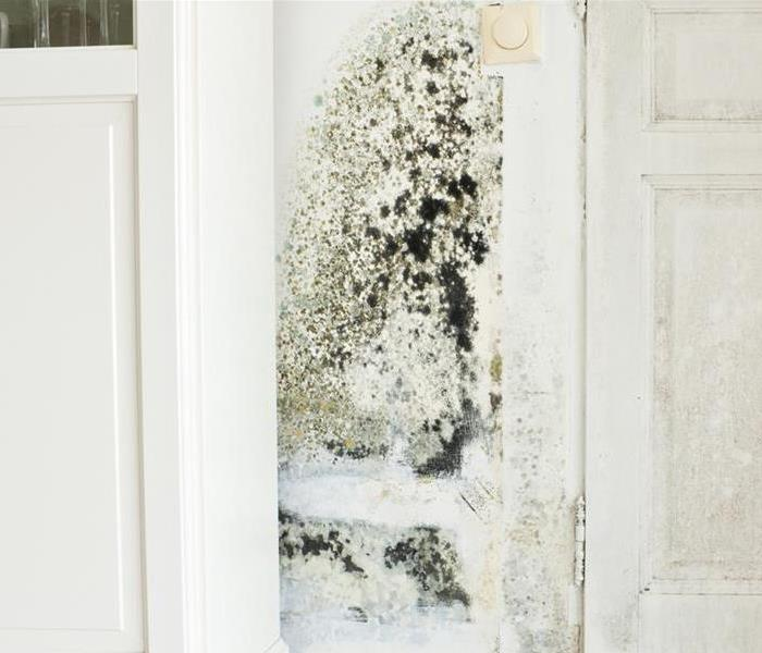 Mold Remediation Mold, DO NOT DISTURB