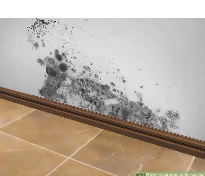 Mold Remediation Do You Have Mold?  What To Do If You Suspect Mold.